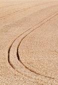Tracks in the cornfield. background — Stock Photo