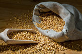 Grains of oats — Stock Photo