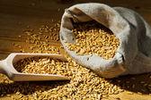 オート麦の粒 — ストック写真