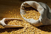 Grains of oats — Stock Photo