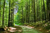 Bosque con ruta — Foto de Stock