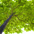 Foliage of a tree — Stock Photo