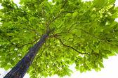 Bladen på ett träd — Stockfoto