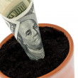 Dollar bill in flower pot. interest rates, growth. — Stok fotoğraf