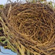 Empty bird&amp;#039;s nest - Stock Photo