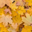 Yellow leaves in autumn — Stock Photo #16318529