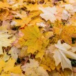 Yellow leaves in autumn — Stock Photo #16318937