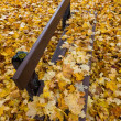 Yellow leaves in autumn — Stock Photo #16319071
