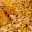 Yellow leaves in autumn — Stock Photo #16319137