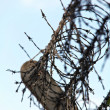 Stock Photo: Barbed wire on a fence