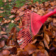 Raking leaves. remove leaves. gardening in the fall. — Stock Photo #21206983