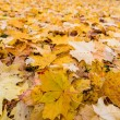 Yellow leaves in autumn — Stock Photo #26174553