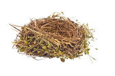 Empty bird's nest — Stock Photo