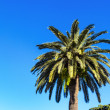 Palm tree against blue sky — Stock Photo