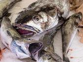 ätbar fisk på marknaden — Stockfoto