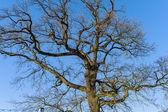 Tree and blue sky — Stock Photo