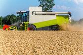 Getreide-feld weizen bei der ernte — Stockfoto