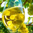 Glass of wine in the vineyard — Stock Photo