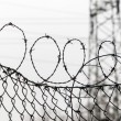 Fence with barbed wire — Stock Photo #38098815