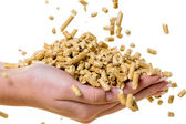Hand with pellets as an old natie energy — Stock Photo