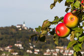 Apple tree with pöstloingberg — Stock fotografie