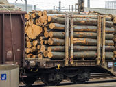 Wagon loaded with wood — Stock Photo