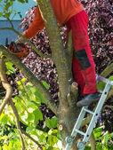 Giardiniere al lavoro — Foto Stock