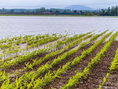 Flood 2013 — Stock Photo