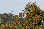Apple tree with pöstloingberg — Stock Photo