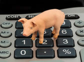 Pig and calculators — Stock Photo