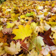 Yellow leaves in autumn — Stock Photo