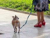 Dog on a leash — Stock Photo