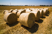 Bales of straw and cereals on a field — Stock Photo