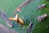Thailand, Pattaya, crocodile farm — Stock Photo