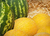 Melons and watermelons heap in wood sawdust, market background — Stock Photo