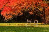 Duas cadeiras e red maple — Fotografia Stock