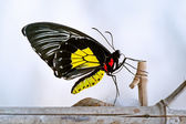 Butterfly on a nesting branch  — Stock Photo
