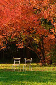 Two chairs and red maple  — Stock Photo