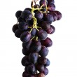 Bunch of grapes on a white background — Stock Photo