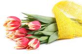 Tulips on white background — Stock Photo