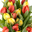Fresh spring tulips — Stock Photo