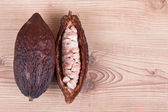 Cocoa fruit — Stock Photo