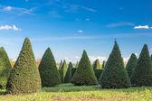 Güneşli bir gün içinde ağaçlar — Stok fotoğraf