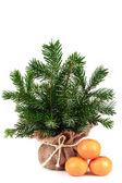 Tree in bag — Stock Photo