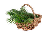 Tree in basket — Stock Photo