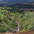 golan heights — Stock Photo