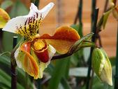 Beautiful l flower — Stock Photo