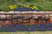 Flowerbed — Stock Photo