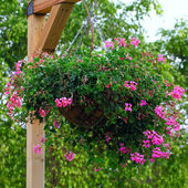 Basket of flowers — Stock Photo