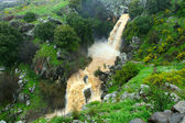 Banias waterfall — Stock Photo